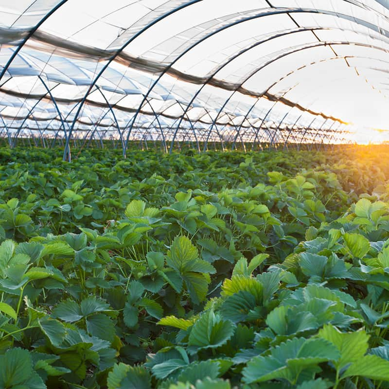 coltivazioni